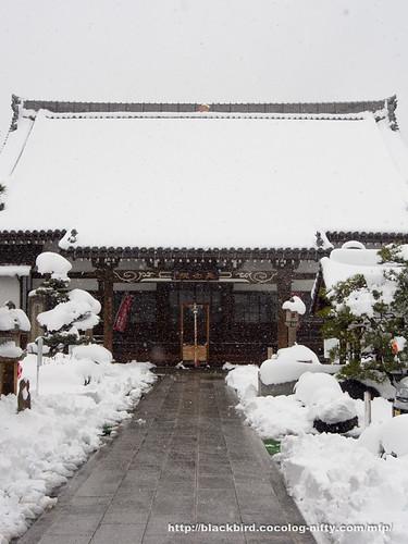 Snow day #06
