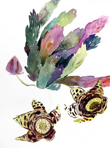 Watercolour of succulent with smelly flower