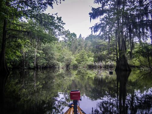 Sparkleberry Swamp-112