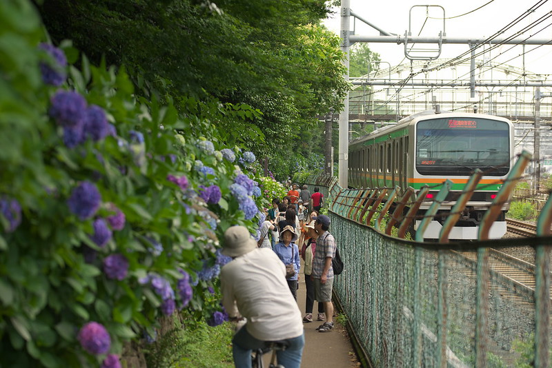 Tokyo Train Story 湘南新宿ライン 2015年6月13日