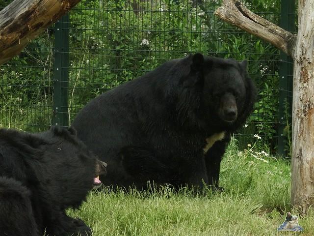 Zoo Berlin 12.06.2015   109
