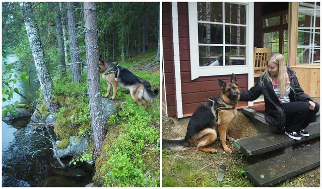 mökkikoira3, mökki, koira, dog, summer house, summer cottage, kesämökki, padasjoki, juhannus, midsummer, vesi, luonto, puut, vihreä, aitta,