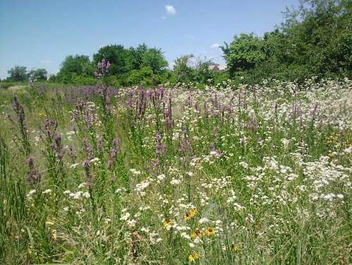 anacostia-in-bloom