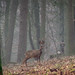 Roe Deer, Lowther