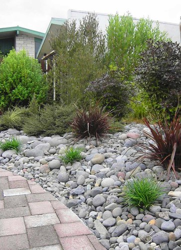 Native nz plants colour garden designer nzlandscapes land for Low maintenance garden nz