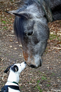 Smeagol & a New Forest Pony having a kiss | by DMC2006