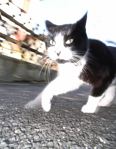 Cat in motion - Ricoh GR | by coyanis64
