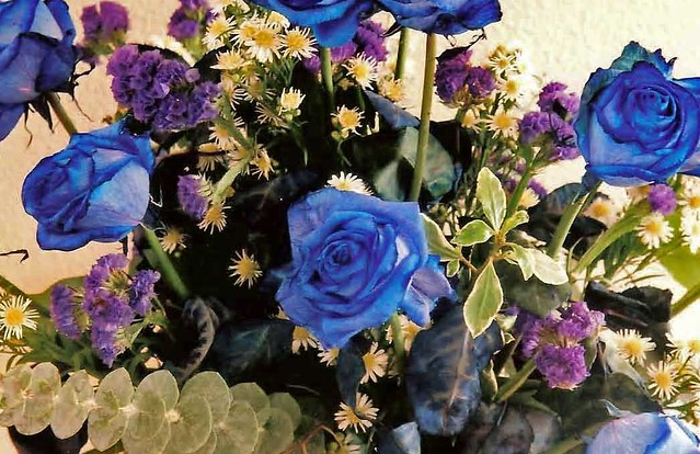a dozen blue roses flickr photo sharing