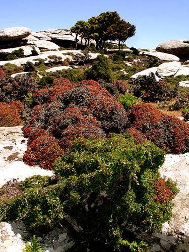Ikaria 214: Between Agios (St.) Isidoros & Mt. Melissa (1033 m.)