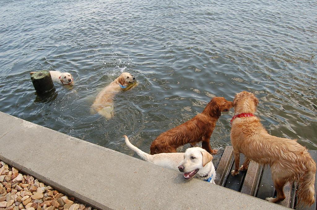 Dog Park Norfolk Virginia