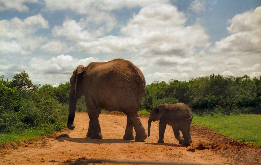 Image result for Addo Elephant Park