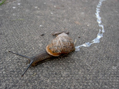 """Snail Trail 