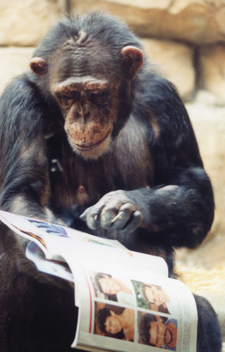 an analysis of the summer of the monkeys This event formed the basis of the hundredth monkey phenomenon  my  study was published in the summer 1985 skeptical inquirer  according to  schultz, watson was quite happy to respond to amundson's analysis of his  monkey tale.