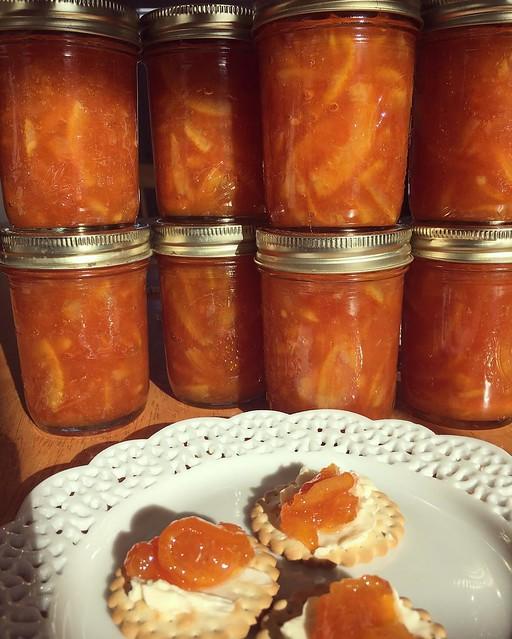Marmalade! 🍊🍊🍊🍊🍊🍊🍊🍊🍊