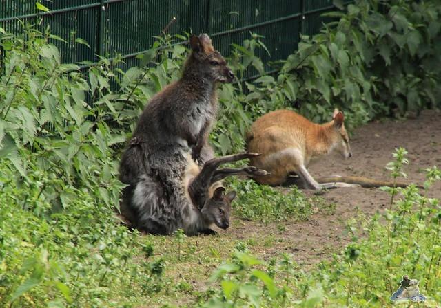 Tierpark Berlin 30.05.2015  148