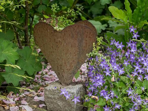 bepflanztes Herz