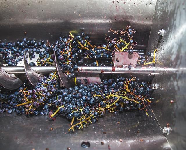 Grapes-0883 (1)