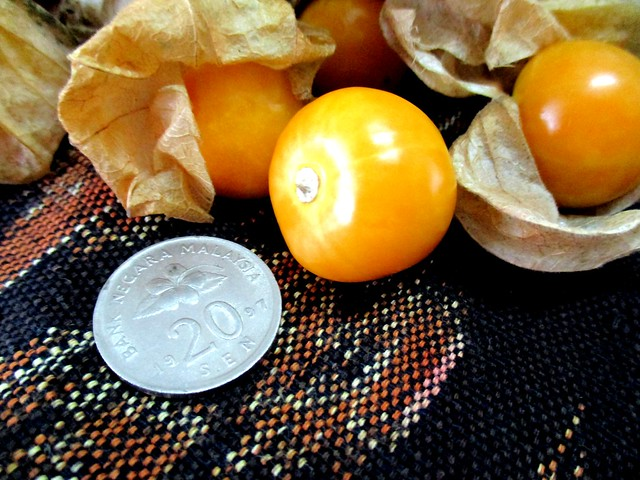 Gooseberry and coin