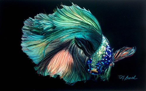 Mixed Media Quilling - Sensual Betta