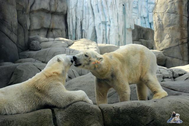 Tierpark Hagenbeck Dschungelnacht 06.05.2015   23