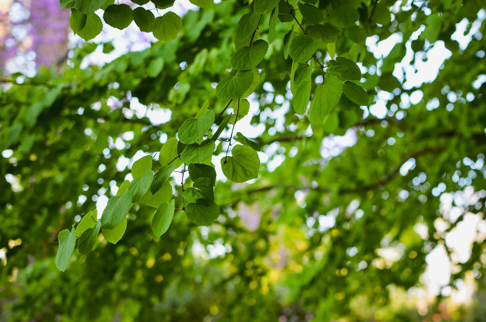 Escapade au jardin des plantes de nantes for Jardin des plantes nantes