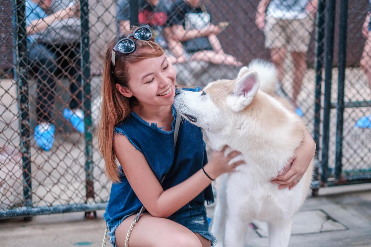 Trice Nagusara | Husky Cafe (True love cafe) Bangkok, Thailand