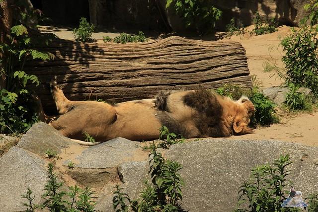 Tierpark Berlin 30.05.2015  218