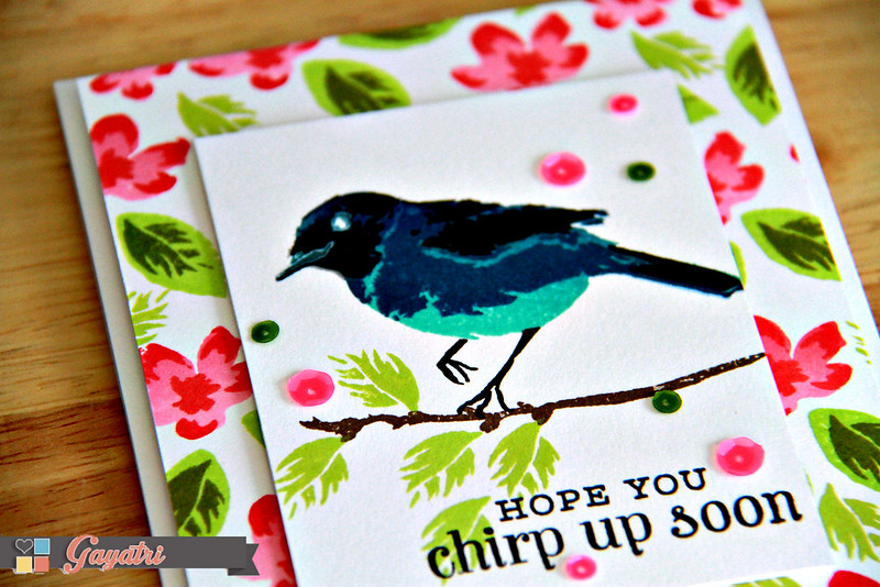 Chirp up soon closeup1