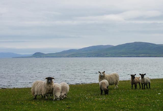 Scotland-55.jpg