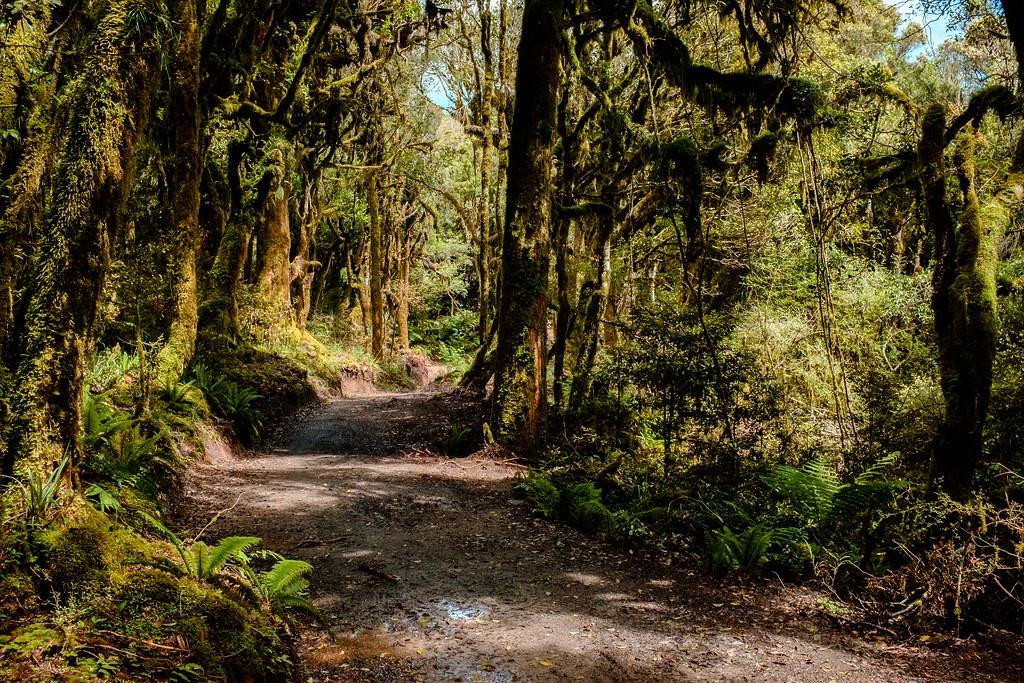 170113_Rotorua to Nat Park -49
