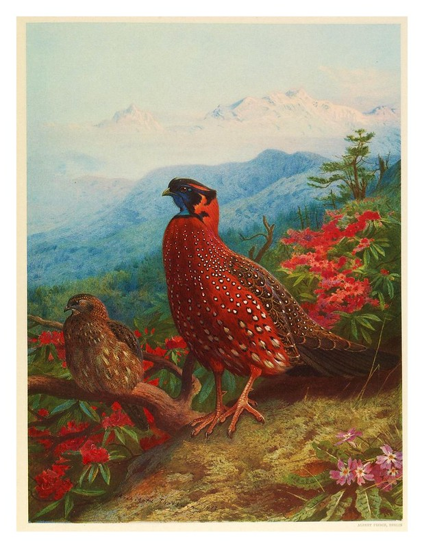 002- A monograph of the pheasants-1918- Tomo I