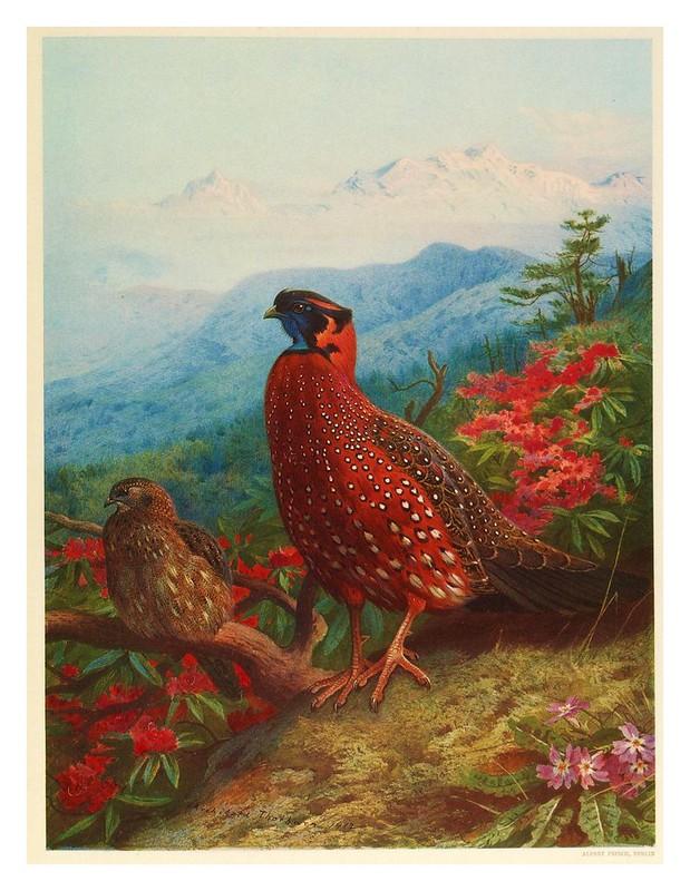 002- A monograph of the pheasants-1918- Tomo I