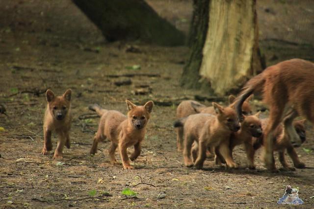 Tierpark Berlin 30.05.2015  138