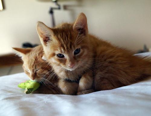 blogpaws-kittensC01538