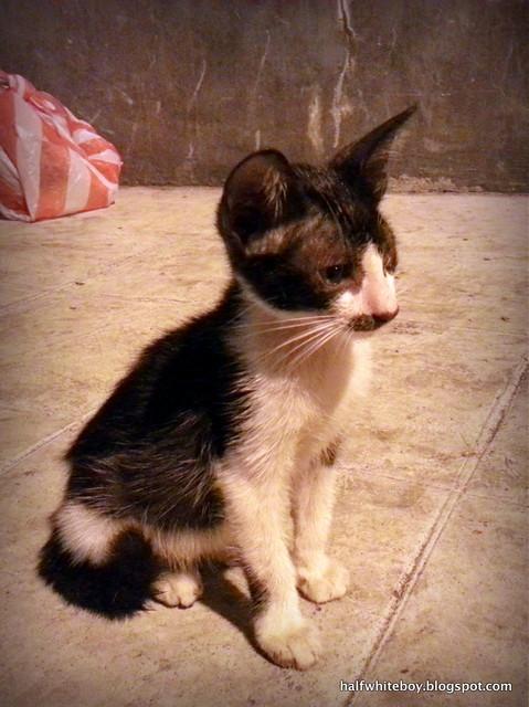stray cats 01