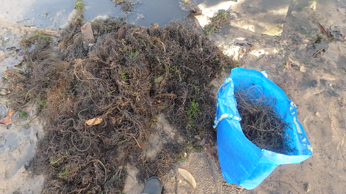 Abandoned fish net at Berlayar Creek