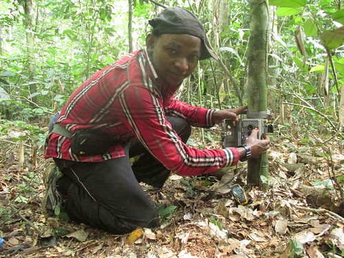 Junior Amboko setting a camera trap