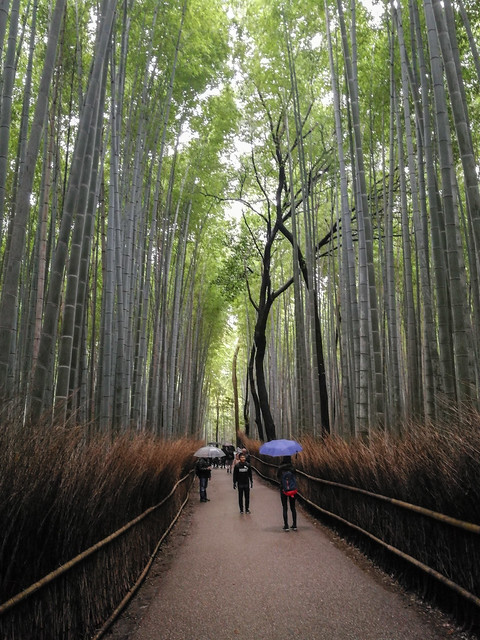 The famed bamboo forest trail. Impressive! There's something similar in Korea too and it never ceased to amaze me.