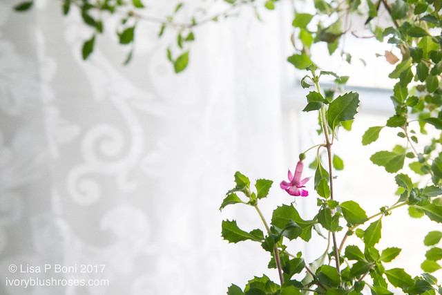 20170207-untitled (24 of 39)