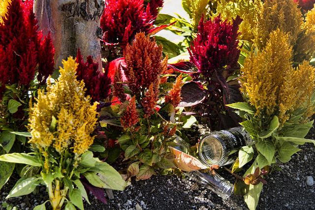 Flowerbed litter
