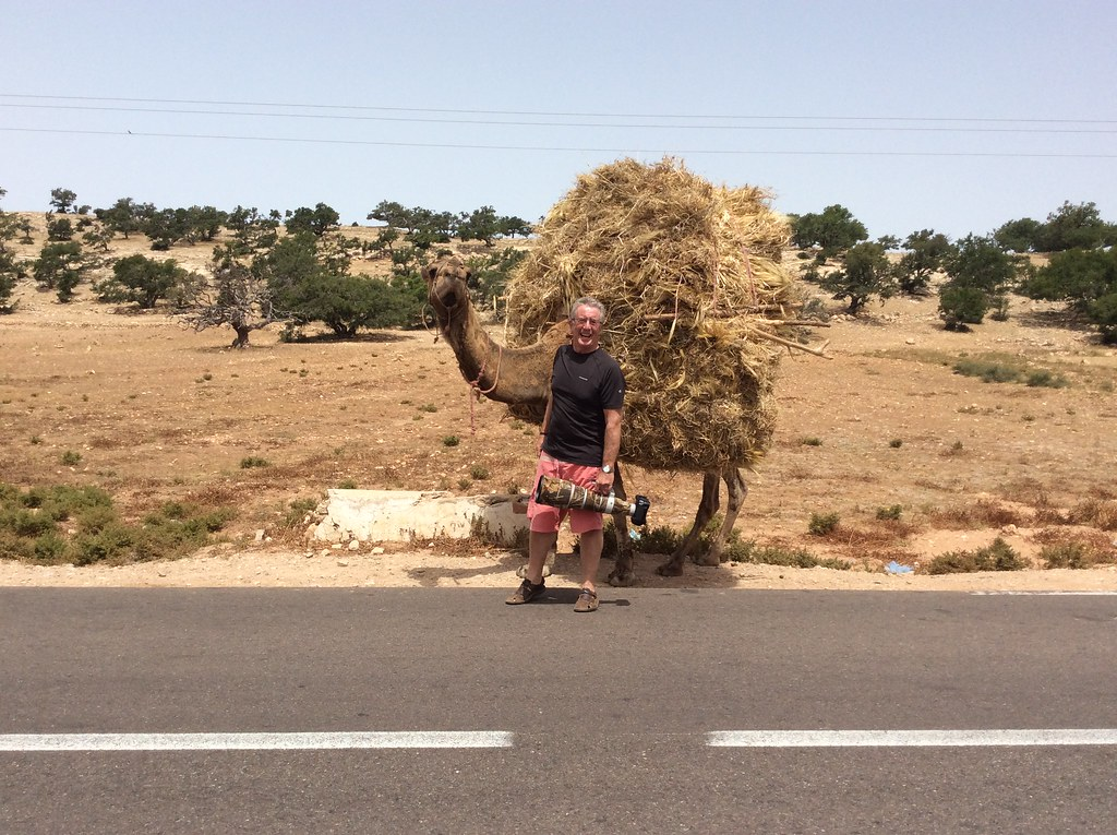 Camel encounter Morocco