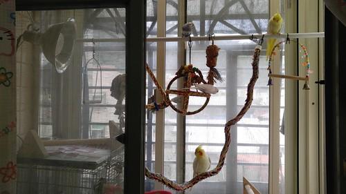 從鳥旅館帶回家的鳥寶們
