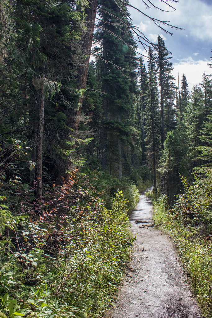 The forest trail at Emerald Lake