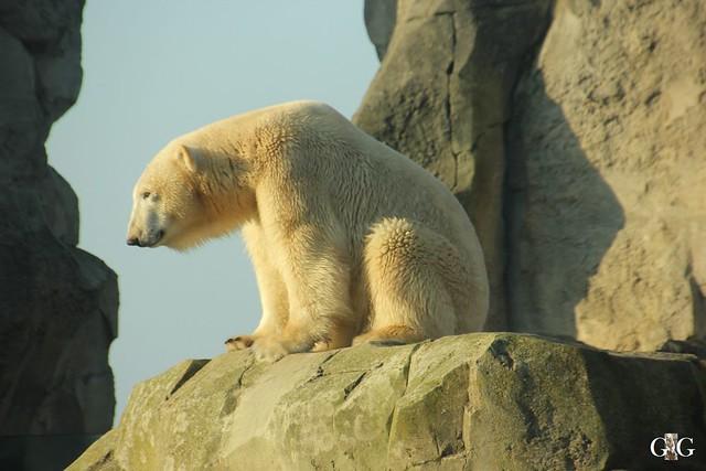 Besuch Zoo am Meer 29.12.20161