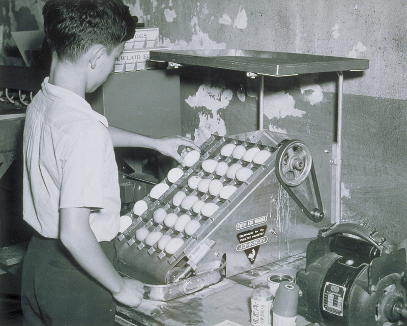 Egg Washer