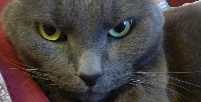 Bubu's eyes