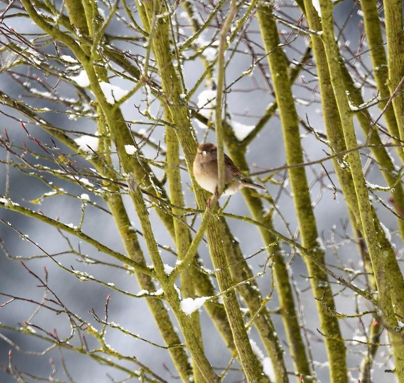 Sparrow16.01 (1)