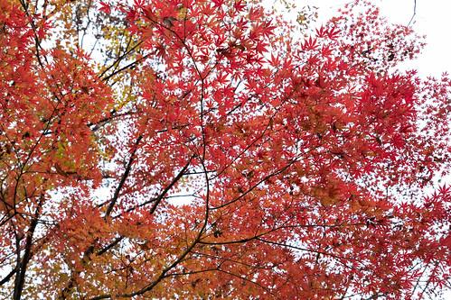 autumn_leaves_2017_06