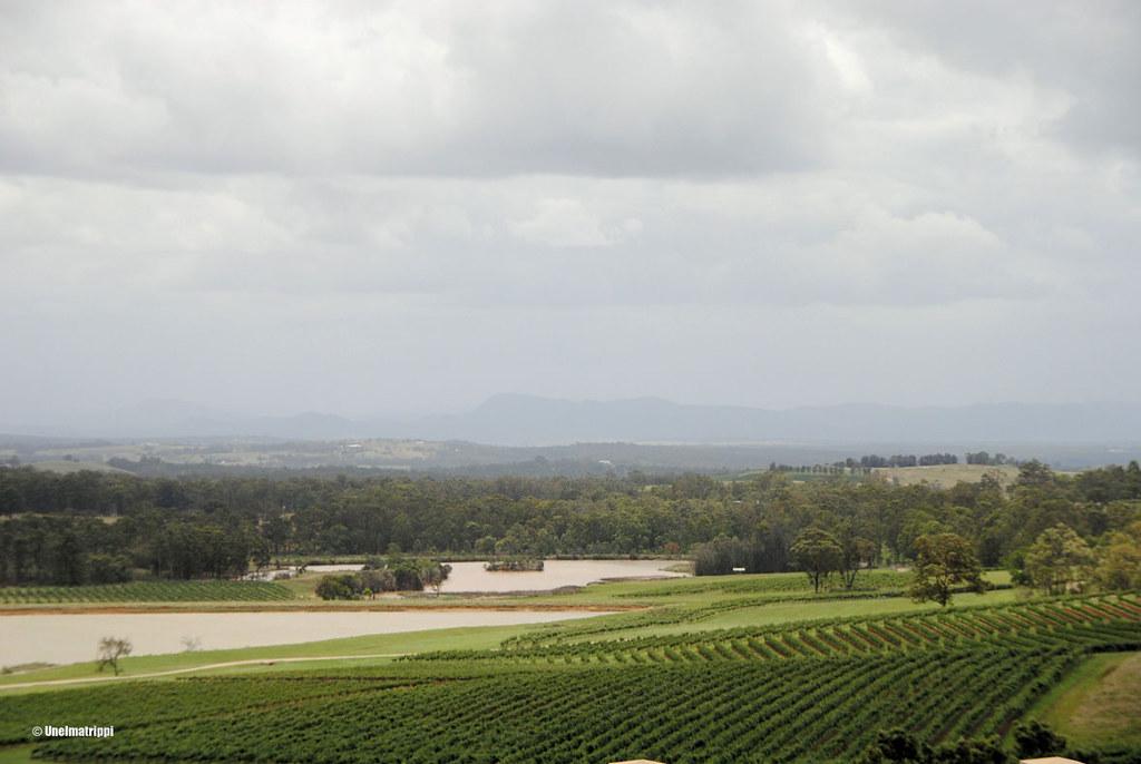 Peltomaisema Hunter Valleyssä, Australiassa