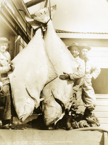 600 pounds of Halibut, Petersburg, Alaska 1930s | by born1945